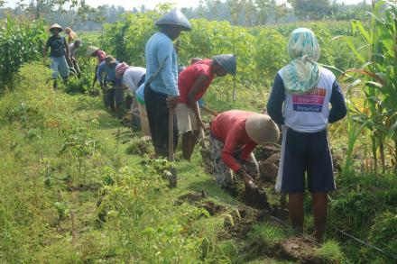Pelaksanaa Program Padat Karya Tunai Desa Tirtomulyo