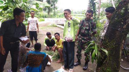 Pengubinan Bawang Merah di Dusun Karangweru.
